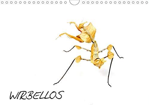 WIRBELLOS (Wandkalender 2020 DIN A4 quer): Insekten, Spinnentiere, Käfer, Skorpione, Phasmiden, Spinnen, Krebse (Monatskalender, 14 Seiten ) (CALVENDO Tiere)