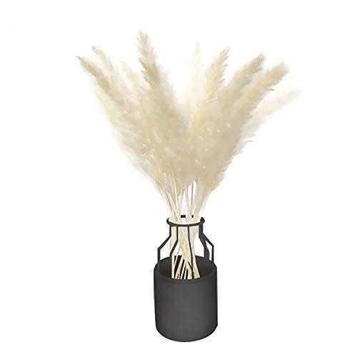Cratone, 50 Stück natürliches, getrocknetes, kleines Pampasgras, künstliche Blumen, Schilfrohrfedern für Zuhause, Hochzeit, Dekoration