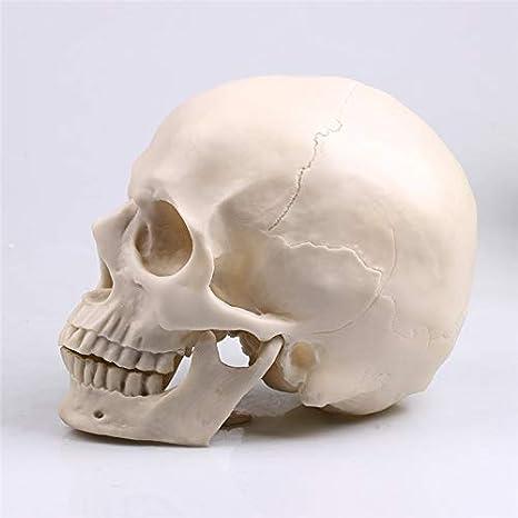 Figura in scala 1//6 azione testa scolpire resina scheletro teschio fai da te