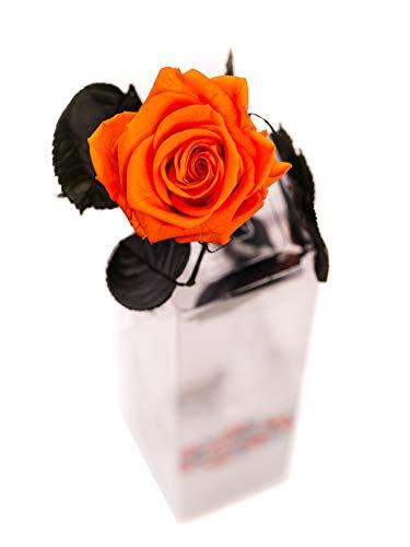Rosen-Te-Amo, konservierte ewige Rose orange (27 cm) & herunterladbare Grußkarte für raffinierte & nachhaltige Dekos. Infinity Rosen: Valentinstag Geschenk für sie & Deko Wohn-Zimmer