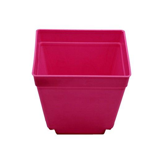 Adhere To Fly Lot de 10 pots de fleurs carrés en plastique pour intérieur Rose 10 cm
