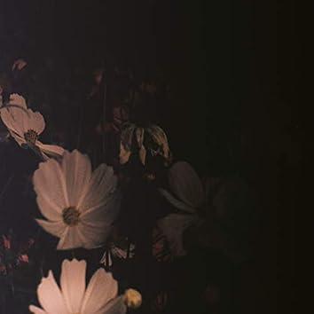 ดอกไม้ผลิบาน