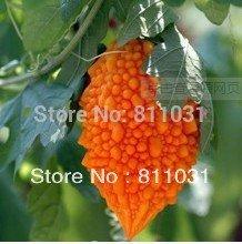 Hot 12pcs de vente Seeds Balsampear Seeds, Lama de pépins de raisin, expédition Délicieux Santé Fruit bricolage jardin gratuit