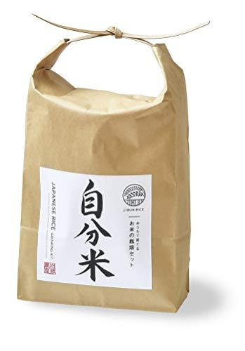 聖新陶芸 自分米 お米の栽培セット ブラウン サイズ:約W16.3 D10.8 H29 GD-901