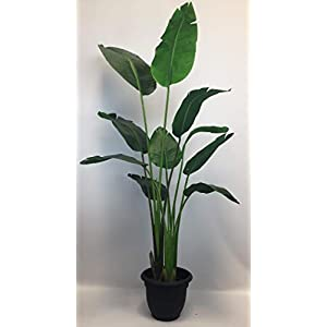 Silk Flower Arrangements Silk Tree Warehouse Company Inc One 5 Foot Tall Artificial Bird of Paradise Palm with Free 10 inch Black Decorative Pot