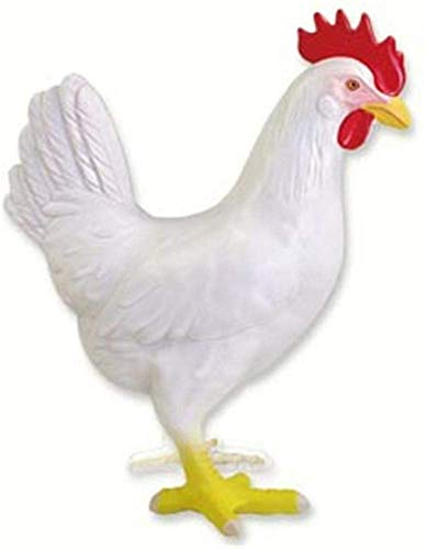 4D Visión extraíble Puzzle Biología Asamblea pollo juguet