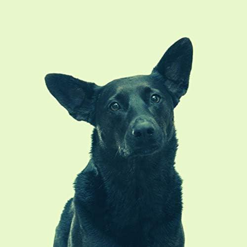 Dog Music 社会