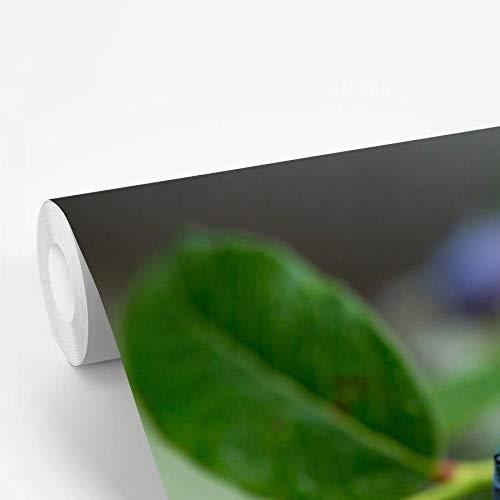 Fotobehang vinyl Blauwe bessenstruik - Regen op een blauwe bessenstruik 600x400 cm