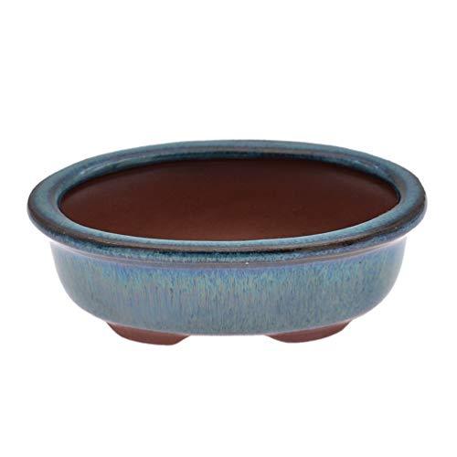 Hongma Bonsaischale Topf Pflanze Töpfe mit Wasserablaufloch Groß Oval Blau