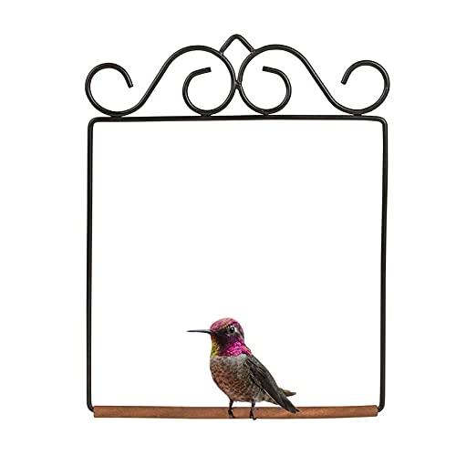 abiet Hummingbird Swing Rust Resistant, kann für Hummingbirds zur Verfügung gestellt Werden, um zu Spielen, rostfreie Metallrahmen, hölzerner Dübel, Hummel-Bird-Perch-Feeder-Zubehör, für draußen