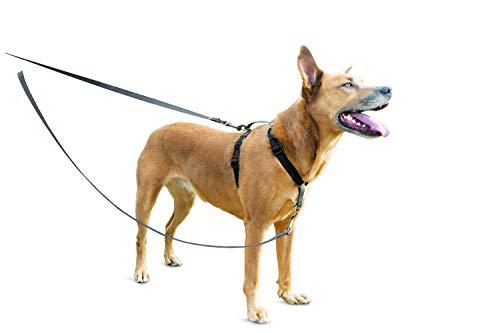 PetSafe Anti-Zieh Hundeleine, Hundeleine Anti-Ziehen, Reflektierende Nylon Hundeleine, 1,2 m lange Hundeleine, Inklusive Leinengriff, Anti-Zieh Leine kleine, mittelgroße, große Hunde