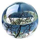 Ecosphere Kugel mit Garnelen KaRoFoilFix