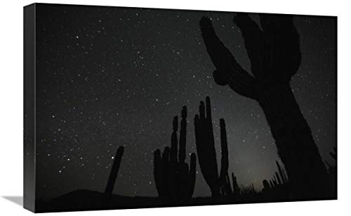 Global Gallery Cardon Cacti by Night with Stars, EL Vizcaino Biosphere Reserve, Mexico. Sequence 2 of 2-Canvas Art-24'x16'