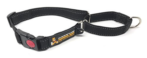 Buy One Give One To A Rescue Pawfessor Dion's Dog Training Gear Pawfessor Dion's Reflective Nylon Martingale Training Dog Collar - Buy One and We Donate One to a Dog Rescue (M, Black)