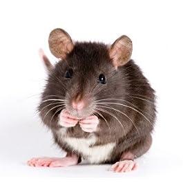 Frozen Rat Sml-Weaner 26-50g, Barcode 10-pack