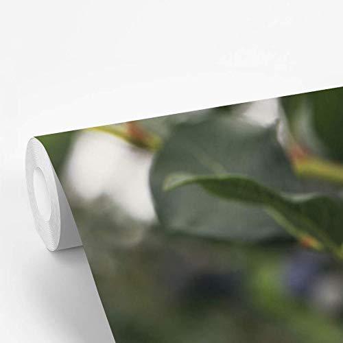 Fotobehang vinyl Blauwe bessenstruik - Rijpe bessen aan een blauwe bessenstruik 320x400 cm