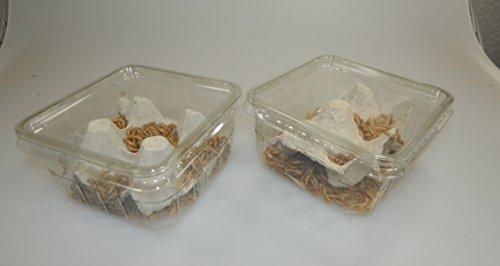 Zoo- Spezi Mehlwürmer lebend 100g aus Deutscher Zucht
