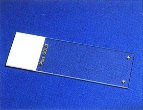 Superfrost Plus Gold Slide, 25/BX