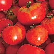 Oregon Spring Tomato - 75 Seeds/ 200 Milligrams - GARDEN FRESH PACK!