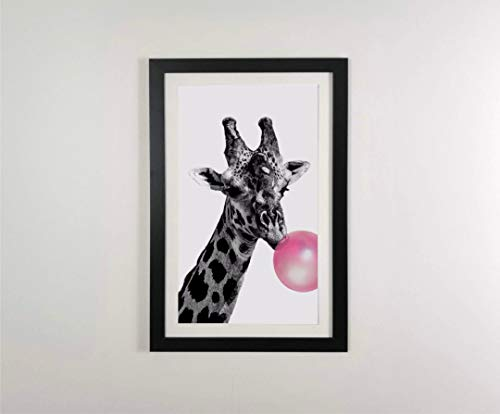 Cuadro con Marco Jirafa Chicle, una girafa Haciendo un Globo de Goma de mascar 37×58 cm Moldura 3 cm Negra Mate Listo para Colgar