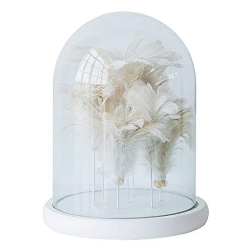 NYKK Art Decorative Statue Clear Glass Cover Feather Ornaments Decorative Baubles Set Memorial Ornament Furniture Decoration Photo Props Gifts Home Décor Products
