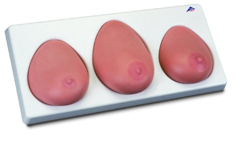 3B Scientific Brust-Tastmodell