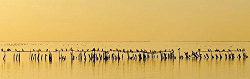 1art1 Vögel - Kormorane In Der Dämmerung, 1-Teilig Selbstklebende Fototapete Poster-Tapete 240 x 75 cm
