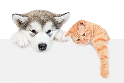 Muralo Vlies Fototapete 152,5x104 Jugend Hund Katze Malamut Moderne Tapete Kinderzimmer Schlafzimmer Wandbilder Wandtapete Wandtattoo XXL Br. 152,5 cm x Hö. 104 cm