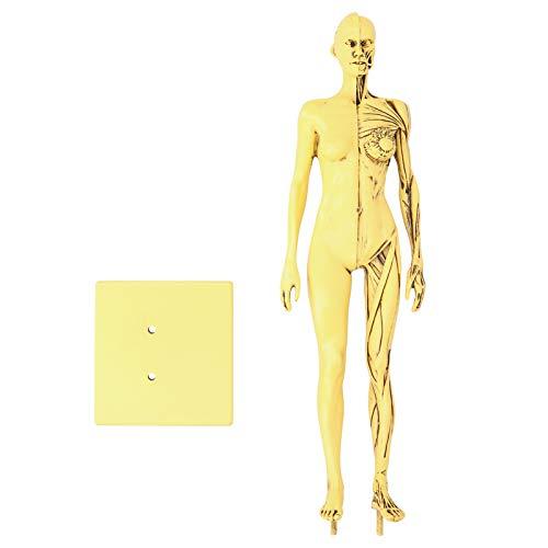 LZKW Stabiles, verschleißfestes Muskelmodell, Muskelknochenmodell, leichtes Skizzenkolleg für den Schulunterricht Schimmelpilz Starker Referenzvergleich