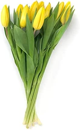 Floral SEAL Ranking TOP7 limited product Tulip Sourced For Stem Good 10