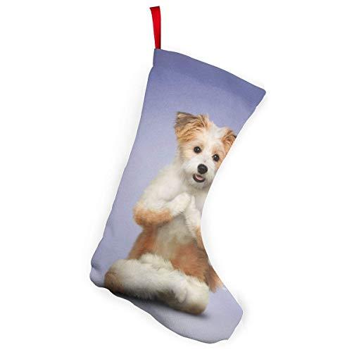 XCNGG Calcetines navideños Calcetines novedosos Adorable Dogs Yoga Christmas Stocking Xmas Tree Decor 10 Inch
