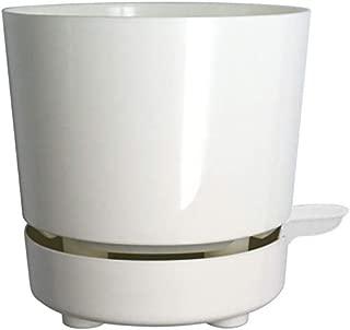quart pot size plant