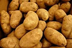 Russet potatoes high in starch perfect to cook mashed potatoes good for baking