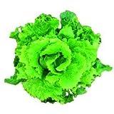 Madre Tierra - Semi di zucchine biologici - Ideale per il tuo giardino