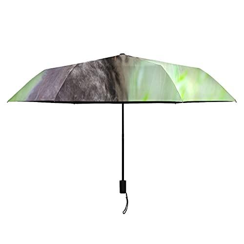 Paraguas para niños, semillas de diente de león de gato, animal exterior, portátil, ligero, resistente al viento, paraguas de viaje para niños, sol, lluvia, perfecto para adultos