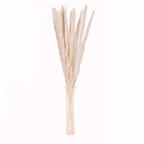 TONGXU 15 PCS Flores Secas Naturales Pampas Grass, Phragmites Communis Bouquet para Arreglos Florales, Decoración del Hogar y Bodas (1 Juego Color Blanco, 50cm)
