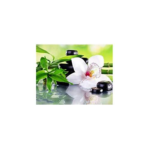 WACYDSD Weiße Orchidee Set Zum Malen Nach Zahlen Auf Leinwand Billige Wandkunst Blumen Bilder Für Wohnzimmer Benutzerdefiniert