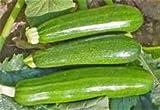 ZUCCHINI SQUASH GREEN FRESH PRODUCE FRUIT VEGETABLES PER POUND