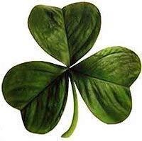FERRY HOCH KEIMUNG Seeds Nicht NUR Pflanzen: Shamrock - Trifolium Dubium - 400 Samen [St Patrick]