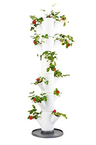 Sissi Strawberry (Classique, blanc) - Planteuse / pot / tour / plate-forme pour fraises - pour balcon, jardin et terrasse - plantation de fraises et d'herbes