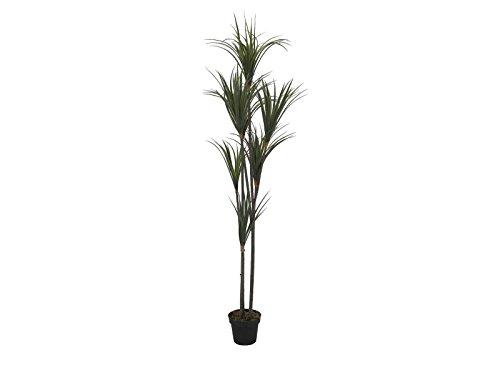 Europalms – Yucca, 180 cm