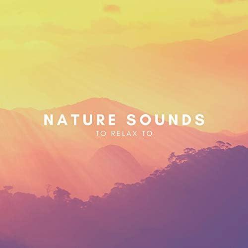 Natural Sounds, Natural Sounds Selections & Zen Sounds