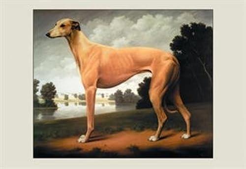 el mejor servicio post-venta Buyenlarge 16341-0P2030 grishound en un un un paisaje de 20 x 30 cartel Parkland  exclusivo