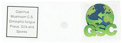 Basidiomycetes, Coprinus Mushroom Anatomy - Microscope Slide