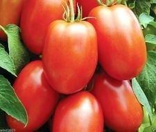 TOMATE SEEDS, Early Roma tomate Heirloom italienne - 500 graines POLLINISATION