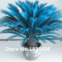 ¡¡¡Gran venta!!! semillas raras Azul Cycas, sagú palmera, flor bonsai, la tasa de 98% planta en maceta en ciernes para el jardín de su casa, 100pcs / bag