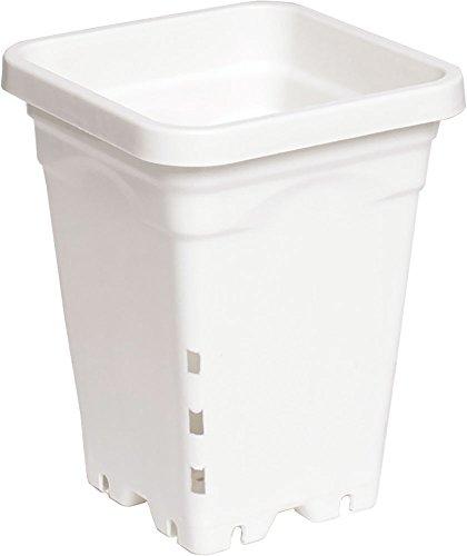 Hydrofarm HG5X5SW Pot Carré 50 par Emballage Blanc 15,2 x 15,2 x 20,3 cm
