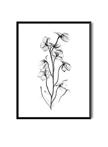 MILUKA Láminas para Enmarcar para Cuadro de Estilo Elegante | Póster de Plantas Estilo Acuarela | Sweet PEA | Varios Tamaños (30 x 40 cm)