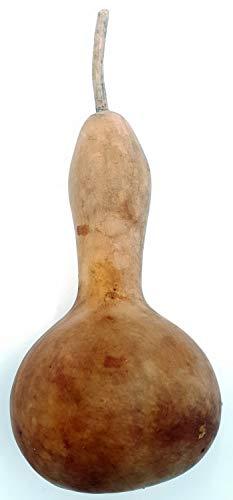 Kalebasse einbauchig 15-20 cm: Kalebasse getrocknet I Kürbis Deko I Calabaza I Mate Kalebasse Becher I Flaschenkürbisse getrocknet I Kalebassen getrocknet I getrocknete Kürbisse I Kalebasse Kürbis