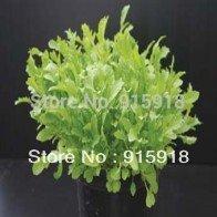 Rocket SeeKay 'Skyrocket' - Salad leaves - 200 graines